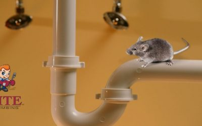 Rodents and Vermin in Your Pipes?!